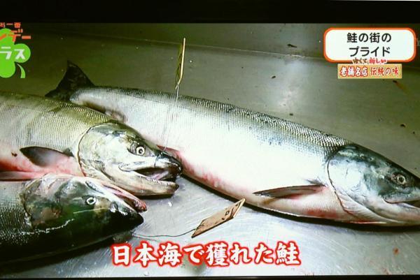 厨房には村上などで捕れた鮭