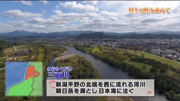 村上の中心地を流れるのは朝日岳を源流に日本海に注ぐ三面川